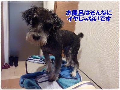 12_22+008_convert_20111222183436.jpg