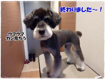 12_22+011_convert_20111222183533.jpg