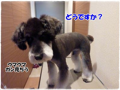 12_22+020_convert_20111222183615.jpg