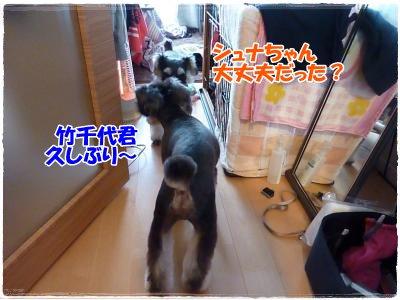 12_22+022_convert_20111222183721.jpg