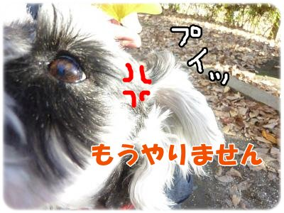 12_4+026_convert_20111206094849.jpg