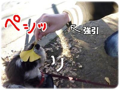 12_4+033_convert_20111206094451.jpg
