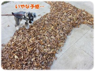 12_4+034_convert_20111206094103.jpg