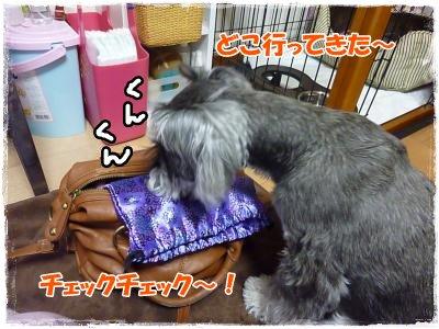 1_21+001_convert_20120127190705.jpg