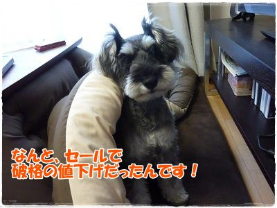 1_29+033_convert_20120129162745.jpg