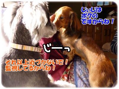1_3+099_convert_20120103195339.jpg