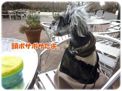 1_4+111_convert_20120105193632.jpg