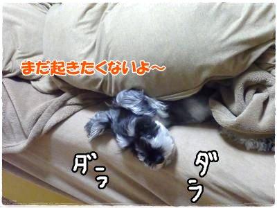 1_7+025_convert_20120108120030.jpg
