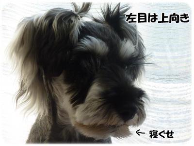 1_9+126_convert_20120112081735.jpg