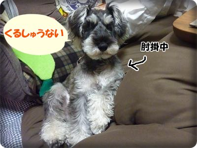 2_17+008_convert_20120217183132.jpg
