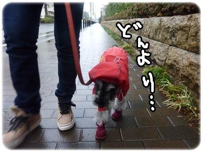 2_25+016_convert_20120225194844.jpg