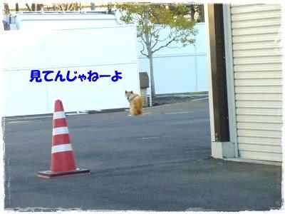2_4+013_convert_20120204112218.jpg