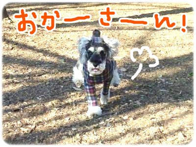 2_5+022_convert_20120205110249.jpg