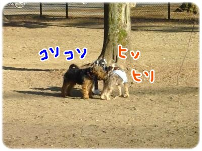 2_5+050_convert_20120205110438.jpg