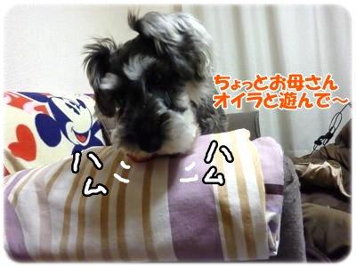 2_8+006_convert_20120210211512.jpg