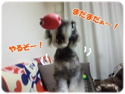 2_8+011_convert_20120210211744.jpg