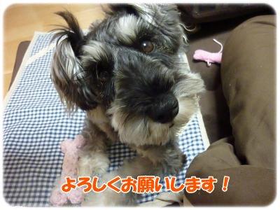 2_8_+004_convert_20120208203924.jpg
