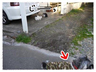 3_27+015_convert_20120327175428.jpg