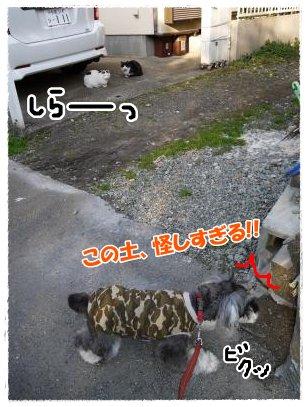3_27+016_convert_20120327175455.jpg
