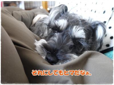3_29+007_convert_20120329180715.jpg