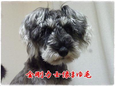 3_3+016_convert_20120303204918.jpg