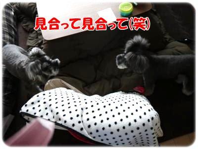 3_30+036_convert_20120330185435.jpg