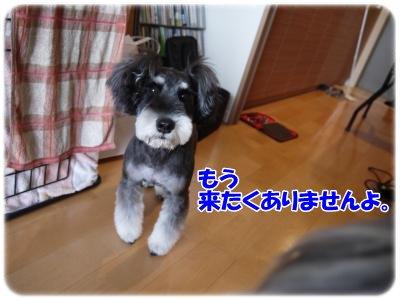 3_30+048_convert_20120330185700.jpg
