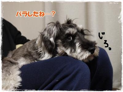 3_9+004_convert_20120310161711.jpg