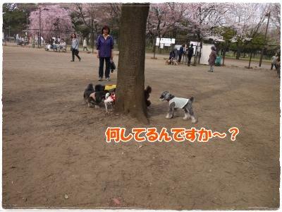 4_10+028_convert_20120410182940.jpg