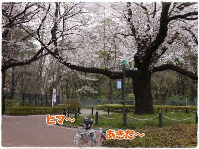 4_10+072_convert_20120410183847.jpg