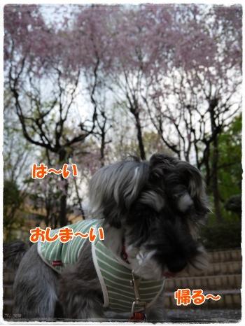 4_17+003_convert_20120417185441.jpg