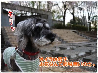 4_17+006_convert_20120417185508.jpg