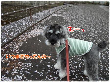 4_17+007_convert_20120417185550.jpg
