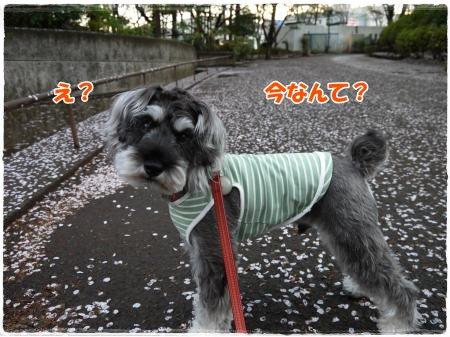 4_17+008_convert_20120417192918.jpg