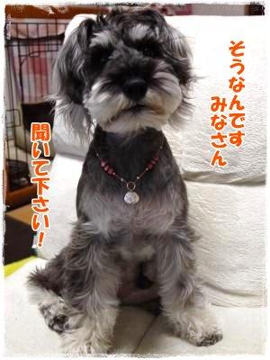 4_18+003_convert_20120418175643.jpg