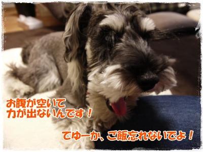 4_18+011_convert_20120418175559.jpg