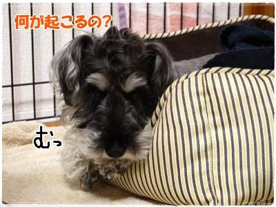 4_20+008_convert_20120419175940.jpg
