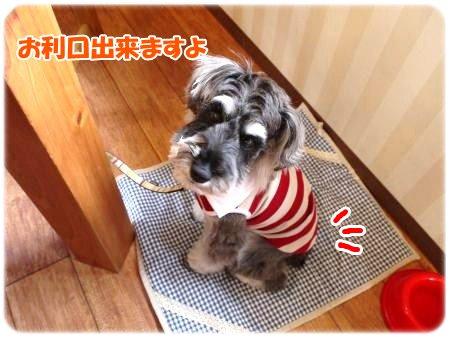 4_23+008_convert_201204231034222.jpg