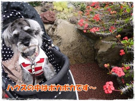 4_23+090_convert_20120423105643.jpg