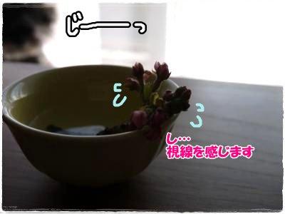 4_4+020_convert_20120404163649.jpg