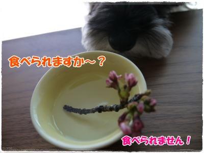 4_4+023_convert_20120404163721.jpg