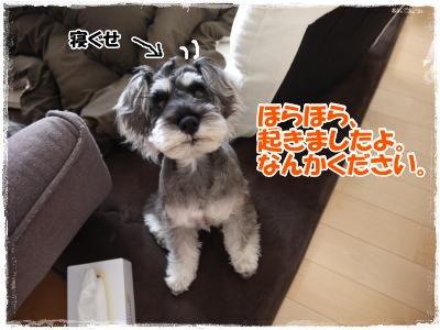4_6+008_convert_20120406183649.jpg