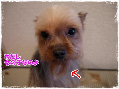 4_9+007_convert_20120409164339.jpg