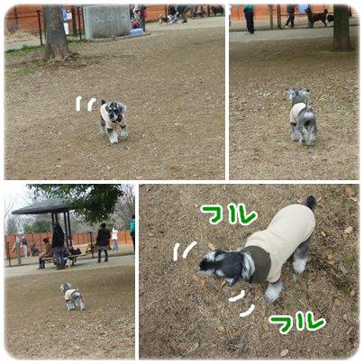 cats1_6_3.jpg