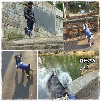 cats2_6.jpg