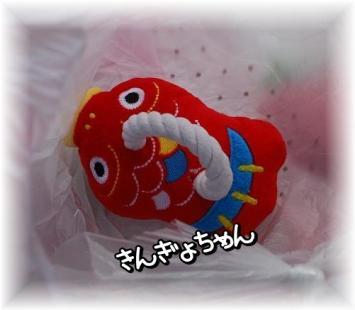 cyoki2.jpg