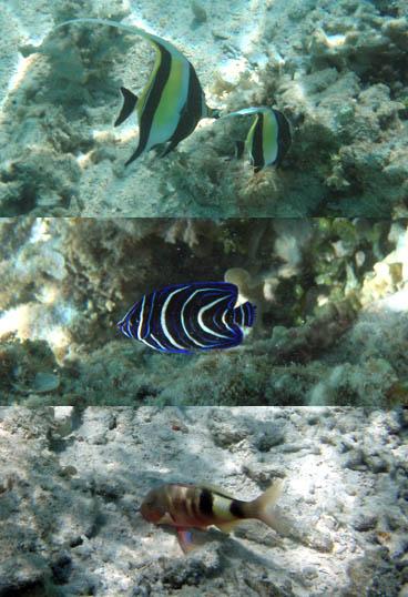 水納島の魚たち