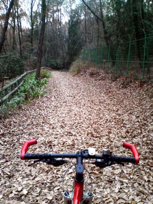 落ち葉の林道