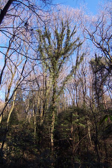 冬枯れの林で