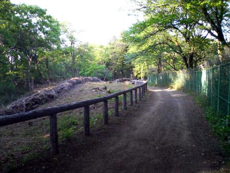 狭山湖北側の林道